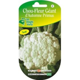 Chou fleur géant d'automne primus