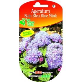 Ageratum Nain Bleu - Blue Mink