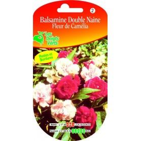 Balsamine Double Naine Fleur De Camélia