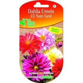 Dahlia Unwins 1/2 Nain Varié