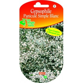 Gypsophile Paniculé Simple Blanc