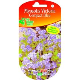 Myosotis Victoria Compact Bleu