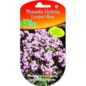 Myosotis Victoria Compact Rose