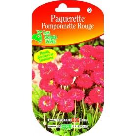 Paquerette Pomponnette Rouge