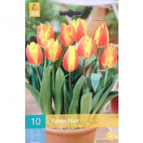 BULBES TULIPE FLAIR 11/12