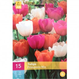 BULBES TULIPE PRIMAVERA MIX