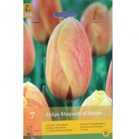 BULBES TULIPE RHAPSODY OF SMILES