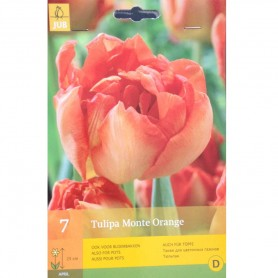 BULBES TULIPE MONTE ORANGE