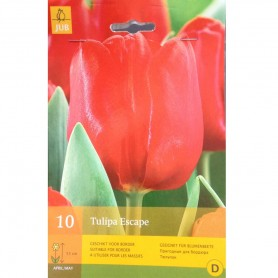 BULBES TULIPE ESCAPE