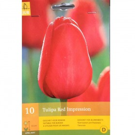 BULBES TULIPE RED IMPRESSION