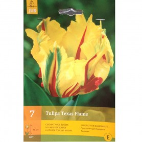 BULBES TULIPE TEXAS FLAME