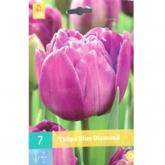 BULBES TULIPE BLUE DIAMOND