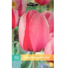 BULBES TULIPE PINK IMPRESSION /10