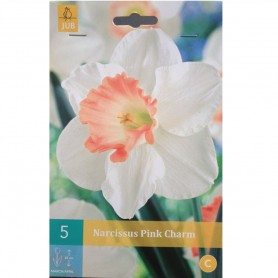 BULBES NARCISSE PINK CHARM