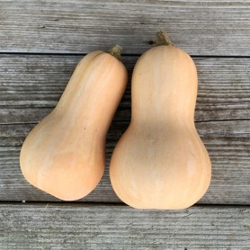 Plants Courge Butternut