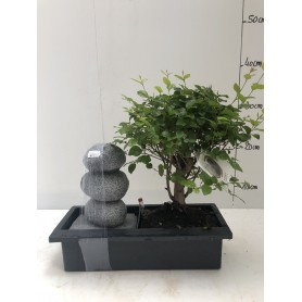 Fontaine Bonsai