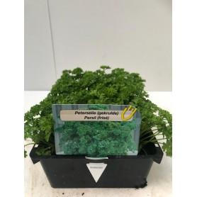 Barquette Persil - Légumes