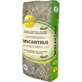 Miscanthus 7.95€