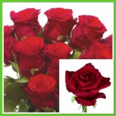 Roses Rouge Ever Red Botte de 10 tiges 9'95€ FC