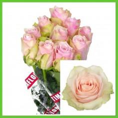 Botte de Rose Pink Athena 9,95€ FC