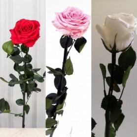 Roses stabilisées à la tige 7,95€