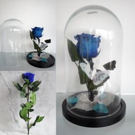 Composition 1 rose bleue Stabilisée et sa cloche 19,95€