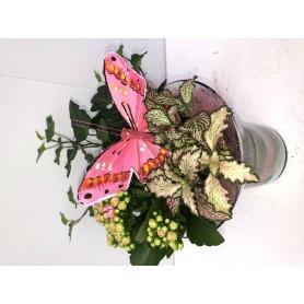 Compositions Roses de plantes D'intérieur 12,95€