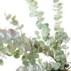 Bouquet d'eucalyptus 10 tiges  5.95€ FC