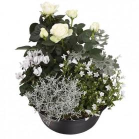 Coupe de 9 Plantes / Deuil 39€