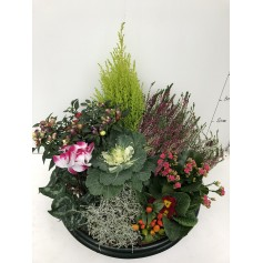 Coupe de 12 plantes / Deuil 55€