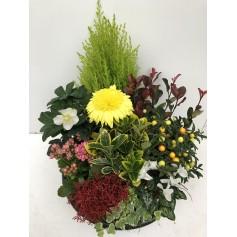 Coupe de plantes 34.95€ / Deuil