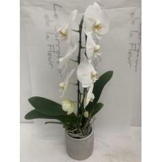 Orchidée cascade + son pot 16.95€