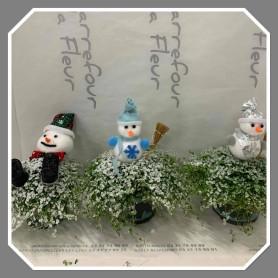 Sélaginelle décoration de Noël 4,95€