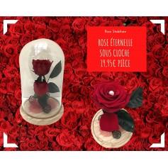 Composition 1 rose rouge et sa cloche 19,95€