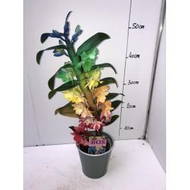Dendrobium coloré 19,95€