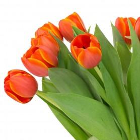 Bouquet de tulipe 4,95€ la botte