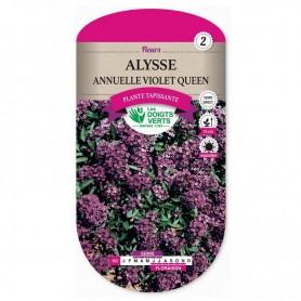 Alysse Annuelle Violet Queen