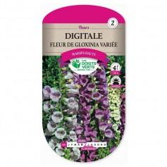 Digitale Fleur De Gloxinia Variée