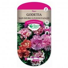 Godetia Nain Double A Fleur D'Azalée