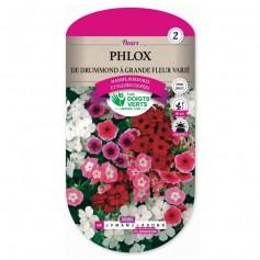 Phlox De Drummond à Grande Fleur Varié