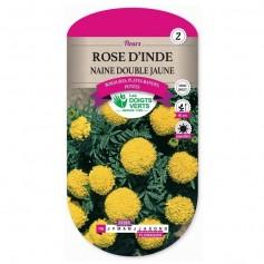 Rose D'inde Naine Double Jaune