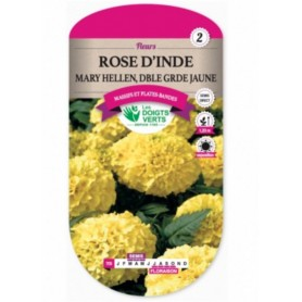 Rose d'Inde Mary Hellen, Double Grande Jaune