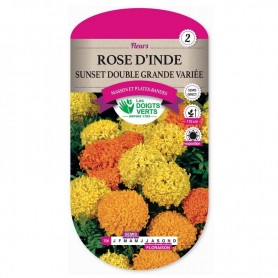 Rose d'Inde Sunset Double Grande Variée