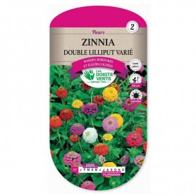 Zinnia Double Lilliput Varié