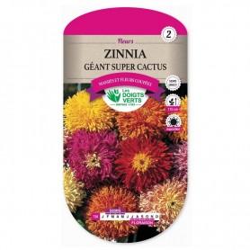 Zinnia Géant Super Cactus
