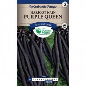Haricot Nain Purple Queen