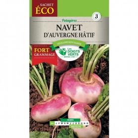 Navet D'Auvergne Hâtif