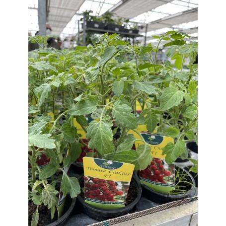 Plant de Tomate Crokini F1 1,45€