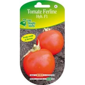 tomate ferline hyb. f1