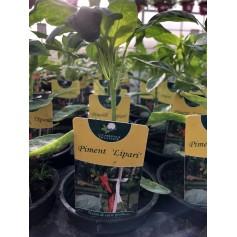 Plants de Piment Lipari 1,45€